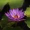 asiatische massagen martin hossfeld heilpraktiker aachen herzogenrath